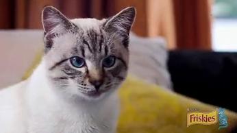 Friskies 猫粮 - 最好的计划