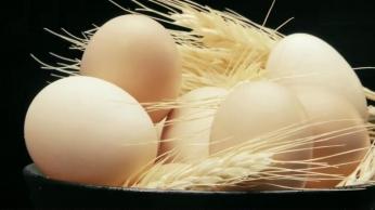 笨鸡蛋产品展示视频